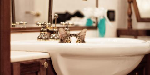 3 Important Plumbing Tips for Pet Owners, West Haven, Connecticut