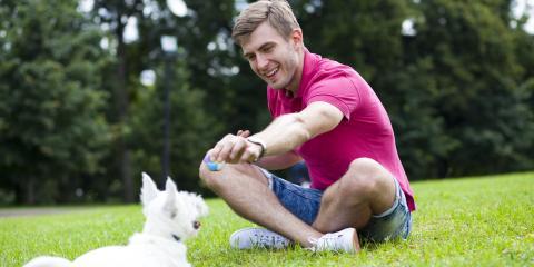 3 Summer Pet Care Tips, McKinney, Texas