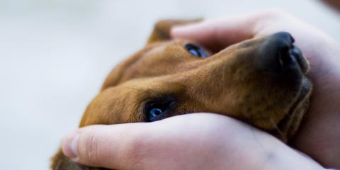 Why Preventing Heartworm Is Important for Pet Health, Clarksville, Arkansas