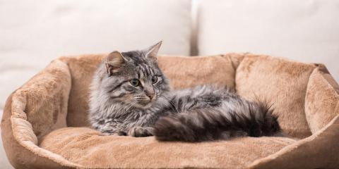 Do Pets Affect HVAC Systems?, Ashland, Kentucky