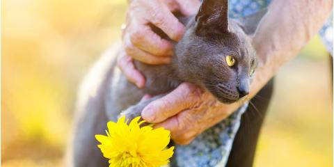 The Top 3 Tips for Boarding an Elderly Cat, Hilo, Hawaii