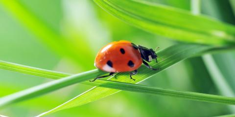 What You Should Know About Ladybug Infestations, Newport, Ohio