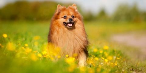 How Can I Control My Dog's Shedding? A Pet Groomer Explains, Fairbanks North Star, Alaska