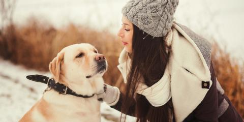 4 Tips for Protecting Your Pet's Paw Pads This Winter, Cookeville, Tennessee