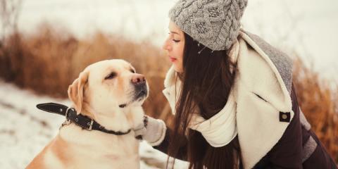 Veterinarians Offer 5 Cold Weather Pet Safety Tips, Wentzville, Missouri