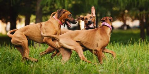 A How-to Guide for Socializing Your Dog, Newport-Fort Thomas, Kentucky