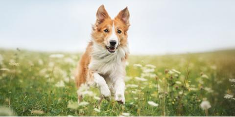 Does Your Dog Have a Grass Allergy?, Sharonville, Ohio