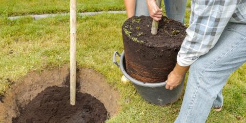 4 Common Questions About Stump Grinding, St. Charles, Missouri