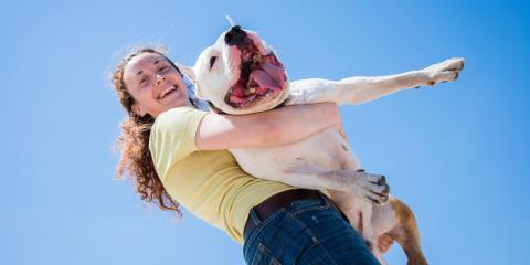 The Importance Pet Oral Health & Teeth Care, , Minnesota
