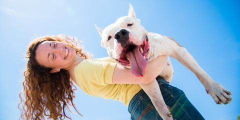 Celebrate Pet Dental Health Month This February, Jefferson, Ohio
