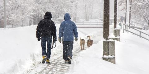 Is Asphalt Road Salt Harmful to Dogs?, Wasilla, Alaska