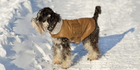 How to Keep Dogs Safe and Comfortable in Cold Weather, Anchorage, Alaska