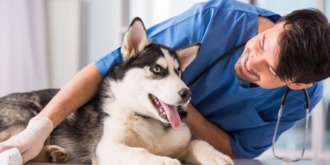5 Signs Your Dog Needs Dental Service, Montgomery, Ohio
