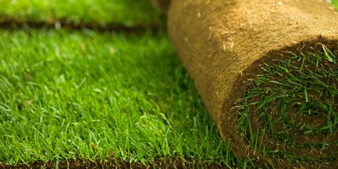 Sykesville's Top Landscape Contractor Explains the Perfect Time to Install Sod, Eldersburg, Maryland