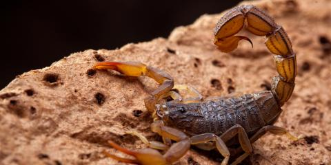 Pest Control in Western AZ: Top 5 Offenders and How to Keep Them at Bay, Lake Havasu City, Arizona