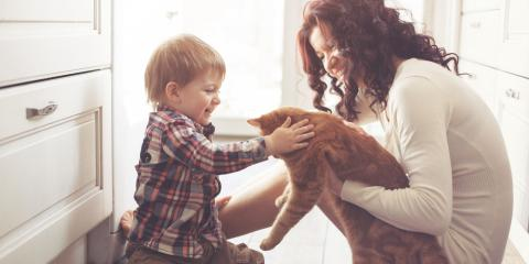 How to Make Moving More Relaxing for Your Cat , Sedalia, Colorado
