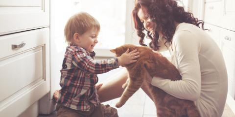 4 Steps Pet Owners Can Take to Maintain Their HVAC System, La Crosse, Wisconsin