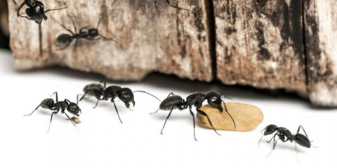 When Are Ants a Problem? Pest Control Experts Explain, Hamilton, Alabama