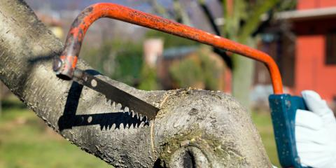 What Are the Problems Caused by Over-Pruning Trees?, Oak Ridge, North Carolina