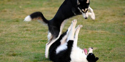 If Your Dog Is Doing This, Playtime Is Getting Too Rough, Lincoln, Nebraska