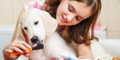 3 Benefits of Brushing a Dog's Teeth, Nicholasville, Kentucky