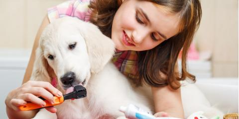 Pet Dental Services: 3 Dental Hygiene Tips for Dogs, Wailuku, Hawaii