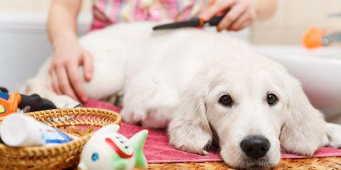 How to Make Dog Grooming More Pleasant for Your Pup, Miami, Ohio