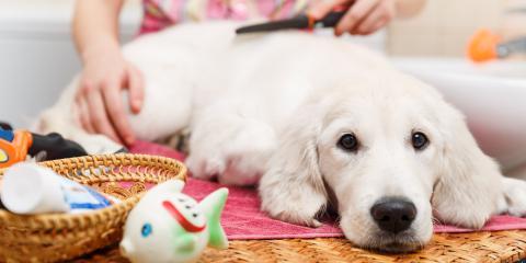 Dog Grooming Methods by Hair Type, Lincoln, Nebraska