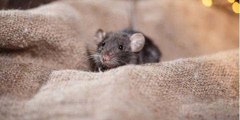 Rodent Removal Company Offers Critter-Proofing Tips for Your Home , Texarkana, Arkansas