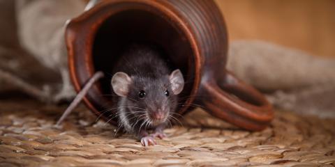 How to Prevent a Rodent Infestation, Lexington, South Carolina