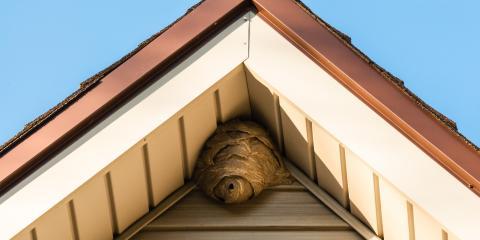 Exterminator Explains How to Identify a Wasp's Nest , Elizabethtown, Kentucky