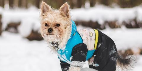 5 Pet Grooming Tips for Winter, Lincoln, Nebraska