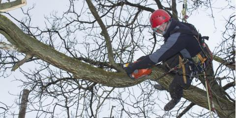 3 Reasons to Hire Licensed Arborists for Residential Tree Service, Bethany, Connecticut