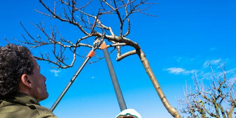 3 Signs It's Time For Tree Pruning, Midland City, Alabama