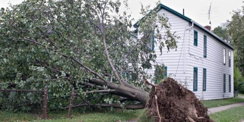 How to Minimize Tree Damage During a Thunderstorm, Springfield, Ohio