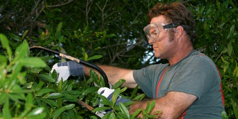 3 Mistakes to Watch Out For While DIY Tree Trimming, Hilo, Hawaii