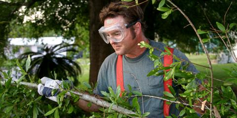 Why Tree Trimming Is Essential for Your Yard's Health, Ewa, Hawaii
