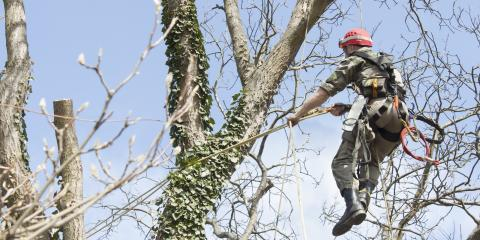 3 Reasons to Leave Tree Pruning to the Professionals, High Point, North Carolina