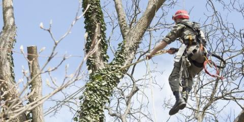 5 Reasons to Hire a Professional for Tree Services, St. Charles, Missouri