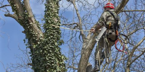 3 Benefits of Hiring a Professional Arborist, Commerce, Georgia