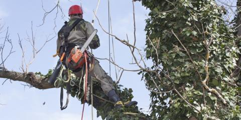 The Importance of Tree Pruning, York, South Carolina