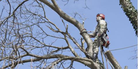 3 Dangerous Tree Problems You Shouldn't Ignore, Kalispell, Montana