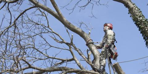 Why Tree Pruning Is Important for Winter Yard Maintenance, Blairsville, Georgia