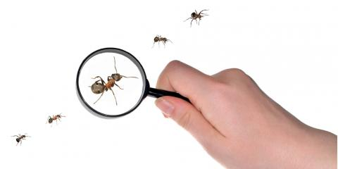 3 Things to Know About Ant Control Services, Dothan, Alabama