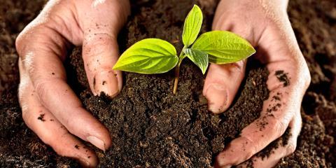 3 Herbs for Your Edible Garden in Hawaii, Honolulu, Hawaii