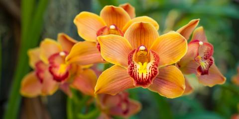 3 Garden Store Tips for Proper Orchid Care, Hilo, Hawaii