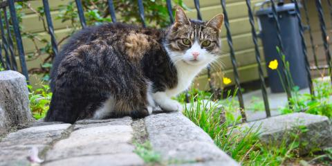 Adopting a Stray Cat? 3 Important Steps to Take, Stratford, Connecticut