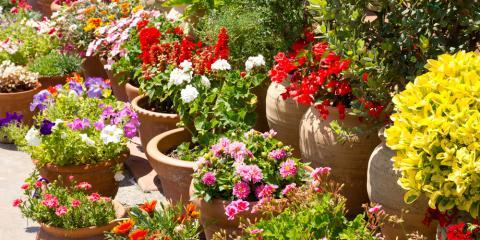 4 Essential Summer Gardening Tips , Hilo, Hawaii. Garden Exchange