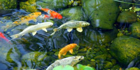 What to Expect From Your Pond Installation, East Bloomfield, New York