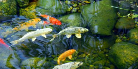 Top 3 Benefits of Adding a Pond to Your Home or Business, Sunman, Indiana